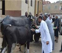 تحصين 62 ألف رأس ماشية ضد الحمى القلاعية والوادي المتصدع بالغربية