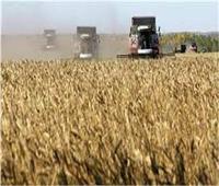 انتهاء موسم توريد القمح بـ3 ملايين و600 ألف طن..اليوم الأربعاء
