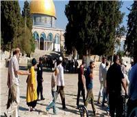 بينهم «المتطرف يهودا غليك».. عشرات المستوطنين يقتحمون المسجد الأقصى