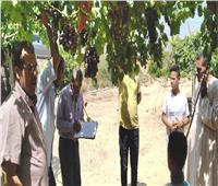 حفاظا على صحة المواطنين.. سحب عينات من محصول العنب بمزارع البحيرة