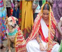 «هندية» تتزوج من كلب لطرد الأرواح الشريرة بجسدها| فيديو