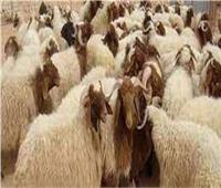 استعدادًا لعيد الأضحى.. «التموين» تلاحق أباطرة الغش التجاري بحملات مكثفة