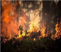 روسيا.. حاكم تشيليابينسك يكشف وضع حرائق الغابات في المنطقة