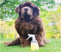 «روّق كلبك».. برفان لتعطير الحيوانات