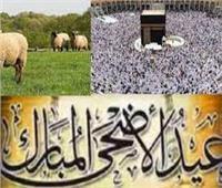 التموين: ضخ100 طن لحوم سودانية.. وتوفير 8 آلافعجل بمناسبة العيد