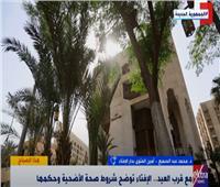 «توقيت الذبح وسن الأضحية».. «الإفتاء» تجيب على أسئلة المواطنين قبل العيد | فيديو