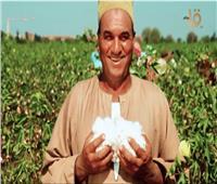 الذهب الأبيض يستعيد بريقه.. استراتيجية لزراعة وتسويق القطن المصري|فيديو