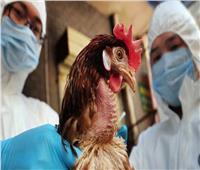 الصين تعلن تسجيل إصابة مسن بإنفلونزا الطيور