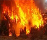 إخماد حريق علي ضفاف ترعة الإبراهيمية بالمنيا