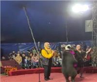 دب يهاجم مدربيه 3 مرات خلال عرض للسيرك في روسيا
