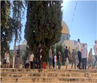 منذ صباح اليوم.. أكثر من 1500 مستوطن يقتحمون المسجد الأقصى