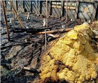 نفوق 3 آلاف دجاجة في حريق بمزرعة دواجن بالإسماعيلية