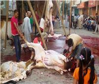«10 آلاف جنيه».. الطب البيطري يكشف عقوبة الذبح في الشوارع وخطورته | فيديو