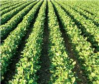 «الزراعة» تطالب الفلاحين بتأجيل زراعة الثوم .. لهذا السبب