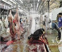 متحدث الزراعة: الوزارة وفرت أطباء بيطريين بالمجازر الحكومية بالمجان