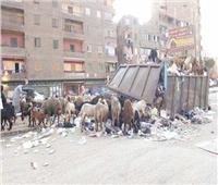 تجنبوا.. «أغنام القمامة»