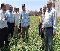 الزراعة: صرف الأسمدة وحل مشاكل المزارعين في دمياط