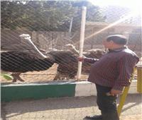 عيد المحافظات  إقبال غير مسبوق على حديقة حيوان الزقازيق