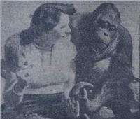 في الخمسينيات.. طبيب يحول قرداً إلى «إنسان»!