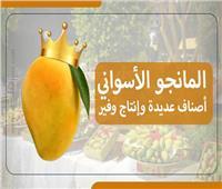 المانجو الأسواني يهدد عرش «التمور»..إنتاج وفير ينقصه التسويق