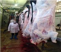 خاص| ذبح أكثر من ١٠٠ ماشية منذ بداية عيد الأضحى بمجزر البساتين