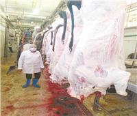 «المجازر» تستقبل 20 ألف أضحية.. ومستمرة في العمل غدًا