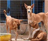 كلب ضال يعقر مسنة في وجهها بمحافظة المنوفية