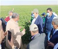استمرار حصاد البنجر في غرب المنيا وتوريد 60 ألف طن لمصانع السكر   صور