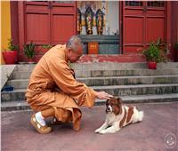 راهب بوذي يرعى 8 آلاف «كلب» شارد في معبده لـ 26 عام   صور وفيديو