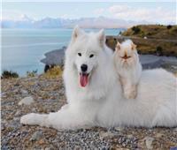 ابتسامة كلب وتكشيرة قط تحولهما لمشاهير عبر «إنستجرام»| صور