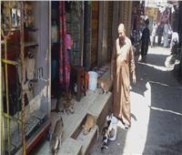 حكايات| مشمش وأخواتها.. «ناصر» يطعم قطط وكلاب الشوارع بمصر والسعودية