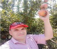 مدير مركز معلومات المناخ: محصول الرومان يحتاج للحماية من الافآت المرضية