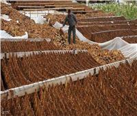 منح مهلة لمصانع «المعسل» لتوفيق أوضاعها حتى 31 ديسمبر