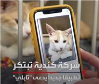 تطبيق ذكي يكشف الحالة النفسية للقطط