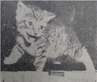 جيران «السيدة المالكة» بعابدين يطالبون باعدام 60 قطة تمتلكها