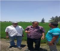 حملة إرشادية «للنهوض بزيادة انتاجية الارز» ببورسعيد