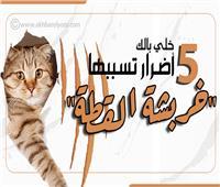 إنفوجراف  «خلي بالك».. 5 أضرار تسببها خربشة القطة