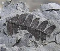 العثور على بقايا حيوانات بحرية عمرها 190 مليون سنة