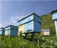 دراسة تحذر من خطر بشري يهدد المحصول الزراعي وموت النحل بالعالم