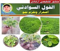 توصيات لمزارعى الفول السوداني لتجنب اصفرار الأوراق وتأخر النمو