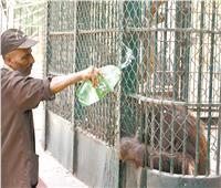 المتنزهات والكورنيش ملجأ «أهل كايرو» لمواجهة الحر