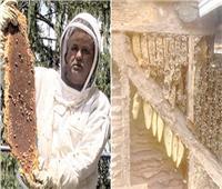 صدمة العمر.. نصف مليون نحلة فى جدران المنزل