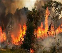 وزير الداخلية الجزائري: أياد تخريبية تقف وراء حرائق الغابات