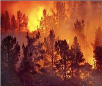 الجزائر تعلن السيطرة على جميع الحرائق بولاية تيزي وزو