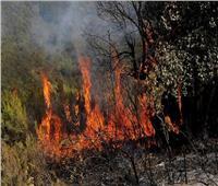 «مخلوقات نارية» أم «ألسنة لهب متحركة» وراء ظاهرة حرائق غابات الجزائر|فيديو