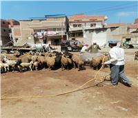استمرار ترقيم وتسجيل «المواشي» بقرى محافظة الغربية