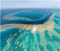 حكايات  الحاجز المرجاني العظيم.. حديقة عمرها 400 سنة «تحت البحر»