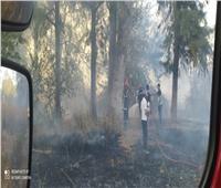 موجة حرائق جديدة في 3 مدن جزائرية