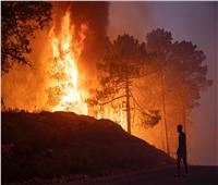 5000 هكتار من الأشجار المثمرة حصيلة حرائق الجزائر