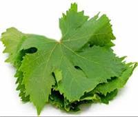 كولاجين طبيعي.. فوائد ورق العنب لتغذية البشرة